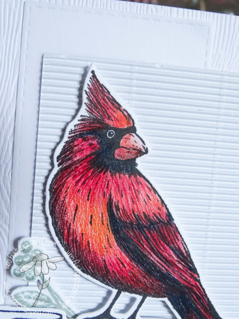 Christmas Cardinal for FMS closeup (1 of 1)