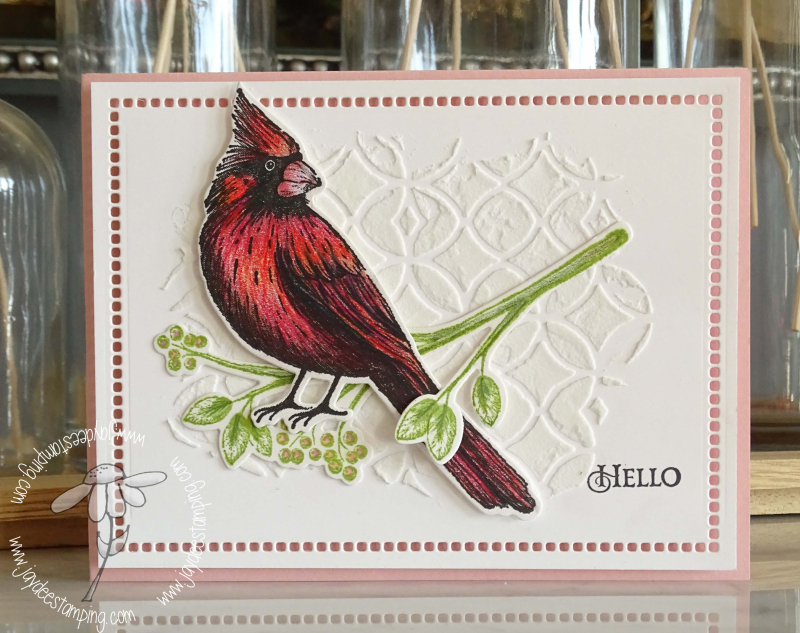 Christmas Cardinal  (1 of 1)
