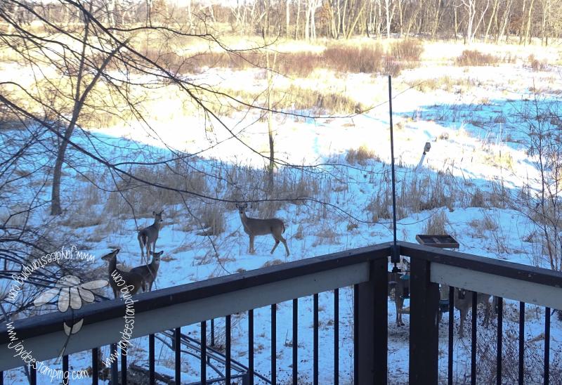 Deer (1 of 1)-4