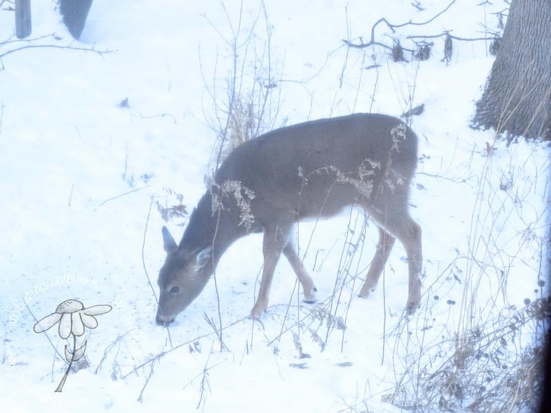 Deer (1 of 1)-12