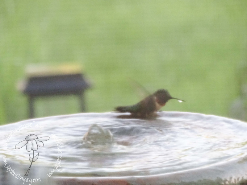 Hummingbird bath (1 of 1)