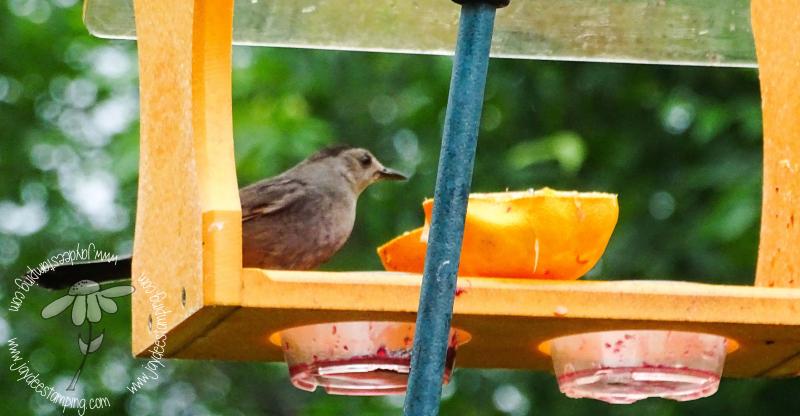 Catbird (1 of 1)-3