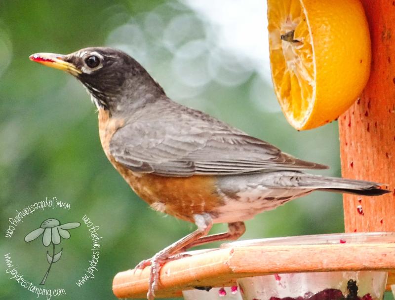 Robin (1 of 1)-7