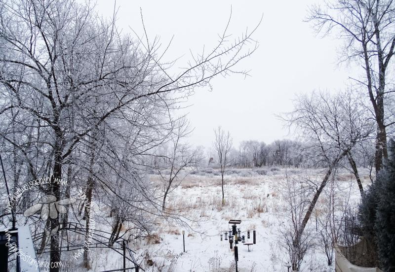 Wetland (1 of 1)-3