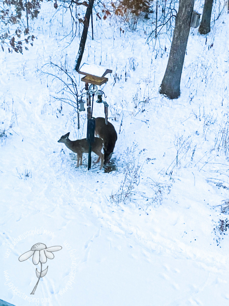 Deer in snow (1 of 1)-2