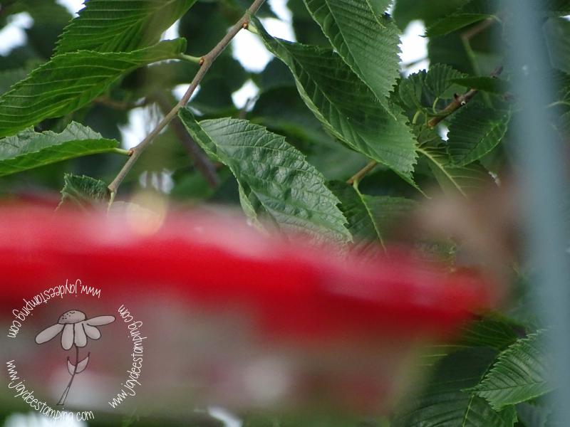Disappearing Hummingbird (1 of 1)