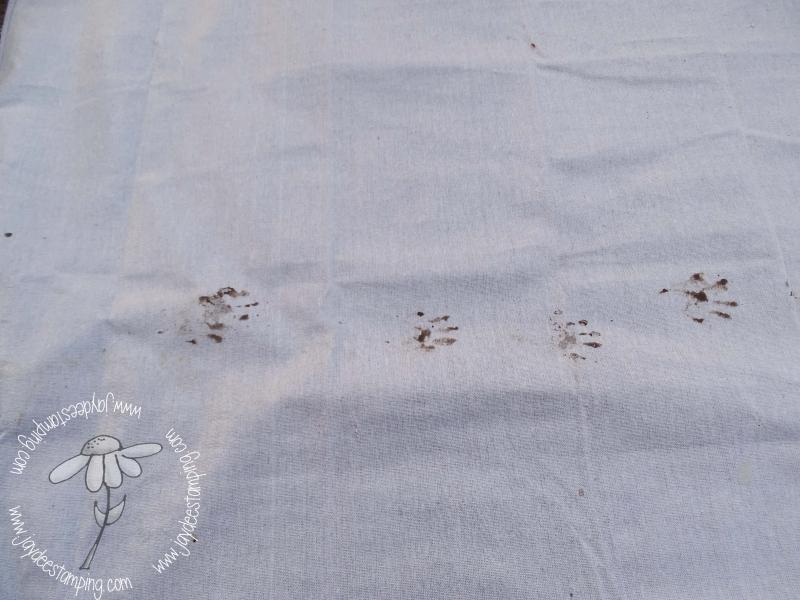 Racoon art (1 of 1)