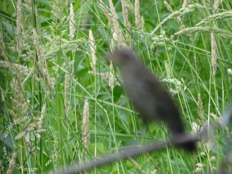Catbird ghost (1 of 1)