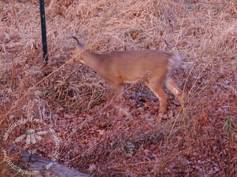 Deer in disguise (1 of 1)