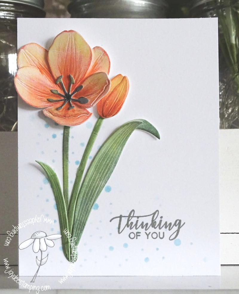 Botanicuts Tulip (1 of 1)-2