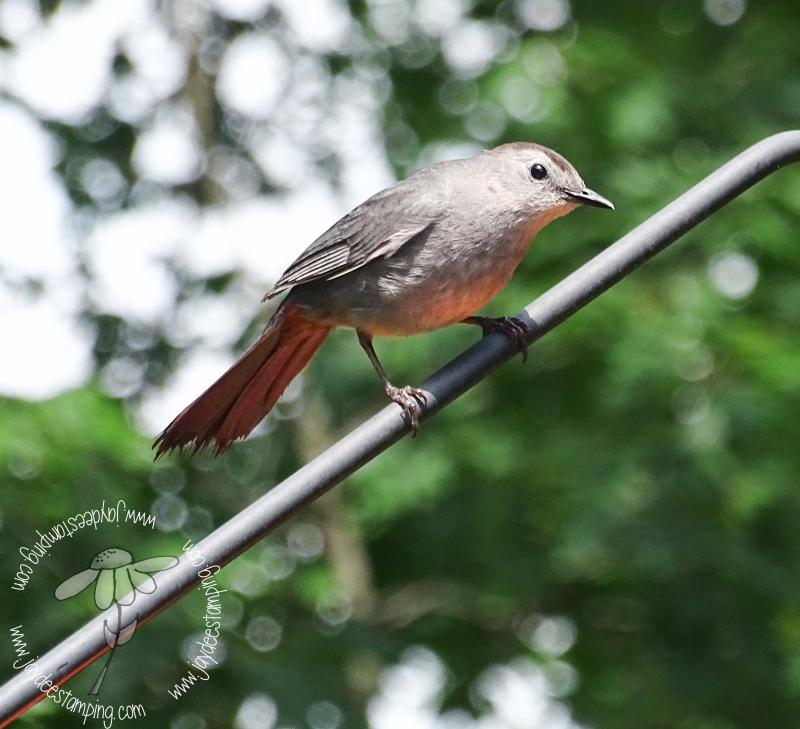 Catbird (1 of 1)-5